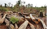 Lĩnh án vì phá rừng