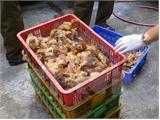 Bắc Giang: Bắt giữ hơn 3 nghìn con gia cầm không rõ nguồn gốc
