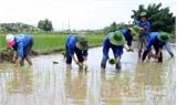 Hoạt động tình nguyện tại Sơn Hải