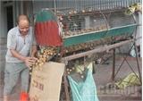 Máy phân loại quả vải khô -  Sáng chế của nhà nông