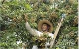 Sản xuất nông nghiệp hàng hóa tập trung: Thế mạnh của Lục Nam