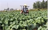 Liên kết cung cấp nông sản sạch cho bếp ăn công nghiệp
