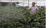 Ứng dụng công nghệ tiên tiến sản xuất hoa chất lượng cao