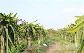Cựu chiến binh Bùi Tân Sơn: 'Đánh thức' đất cằn