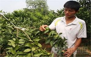Nguyễn Văn Tuấn: Quyết chí làm giàu từ sức trẻ