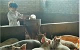 Tổ hợp tác tăng hiệu quả chăn nuôi