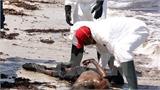 Xót xa cả trăm thi thể dạt vào bờ biển Libya