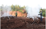 Đốt vỏ gỗ lấy than: Lợi ít, hại nhiều