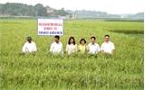 Lợi ích từ sản xuất hạt lúa lai