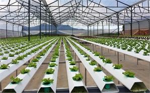 Giao lưu trực tuyến với Giám đốc Sở KH&CN Bắc Giang về nghiên cứu, ứng dụng KH-CN trong nông nghiệp