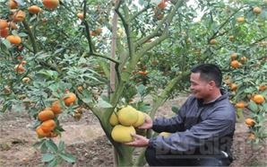 Tăng hiệu quả và sức cạnh tranh cho nông nghiệp Bắc Giang: Những bước tiến  vượt bậc (Kỳ I)