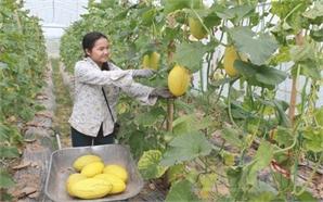Tăng hiệu quả và sức cạnh tranh cho nông nghiệp Bắc Giang: Nâng cao giá trị gia tăng và phát triển bền vững (Kỳ III)
