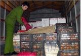 Bắc Giang: Bắt vụ vận chuyển 3 tấn quýt Trung Quốc không có hoá đơn