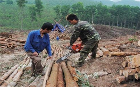 Bắc Giang: Khai thác tiềm năng,  tăng hiệu quả rừng trồng