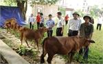 Tặng bò cho hộ nghèo Việt Yên
