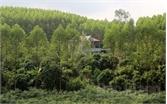 Mũi nhọn kinh tế rừng ở Yên Thế