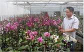 Hoa chất lượng cao rực rỡ đón xuân