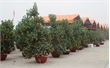 TP Bắc Giang: Bố trí 14 điểm bán hoa, cây cảnh