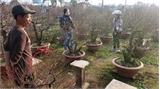 Những khu vườn bạc tỷ ở Nhật Tân, Hà Nội
