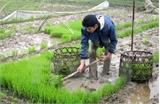 Lấy nước đợt 3 phục vụ gieo cấy vụ Đông Xuân từ ngày 16-2
