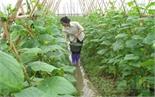 Học và làm theo Bác ở xã Quang Thịnh: Hoàn thành nhiều nhiệm vụ trọng tâm