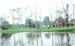 Tổ hợp tác nuôi thủy sản