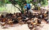 Ký cam kết không sử dụng chất cấm trong chăn nuôi