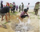 Quảng Bình: Hỗ trợ ngư dân gặp khó khăn do cá chết bất thường