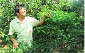 Giảm phân vô cơ, tăng năng suất cây trồng