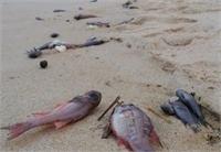 Thủ tướng chỉ đạo khẩn trương xác định nguyên nhân cá chết