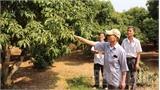 Gần 5.300 lượt người được chuyển giao KH-KT về trồng trọt, chăn nuôi