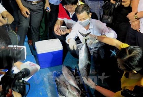 Thành lập Hội đồng KH&CN cấp quốc gia phân tích nguyên nhân hải sản chết tại miền Trung