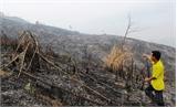 Khởi tố vụ án hủy hoại rừng tại thôn Vách, xã Phú Nhuận