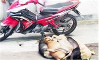 Bắt hai đối tượng trộm chó