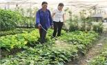 TP Bắc Giang: Xây dựng chuỗi cung ứng thực phẩm an toàn