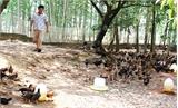 HTX Sản xuất và Kinh doanh dịch vụ chăn nuôi xã Vũ Xá: Không sử dụng chất cấm