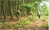 Xã Dương Hưu (Sơn Động): Thu nhập cao nhờ rừng kinh tế
