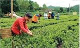 Bắc Giang: Hướng mạnh vào nông nghiệp công nghệ cao