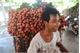 Vải thiều Bắc Giang rục rịch vào mùa xuất ngoại
