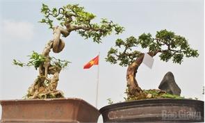 Bonsai trong gió Quảng trường