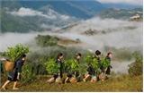 Hỗ trợ hộ dân tộc thiểu số nghèo trồng cam Vinh