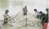 Tổng điều tra nông thôn, nông nghiệp và thủy sản: Bảo đảm thông tin chính xác, đúng kế hoạch