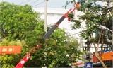 Cảnh báo tai nạn do cây đổ