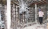Hơn 27 tỷ đồng thực hiện đề án sản xuất nấm