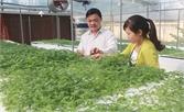 Yên Dũng: Xây dựng mô hình điểm trồng rau an toàn