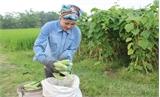 Liên kết theo chuỗi: Hướng đi hiệu quả  của HTX nông nghiệp