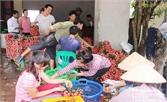 Phố chợ Tân Sơn: Nhộn nhịp bán mua vải thiều muộn