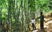 Tam Tiến: Khai thác lợi thế cây dùng phấn