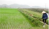Bắc Giang: Gieo trồng hơn 66 nghìn ha lúa, hoa màu vụ mùa
