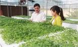 Tạo đà cho sản xuất nông nghiệp công nghệ cao